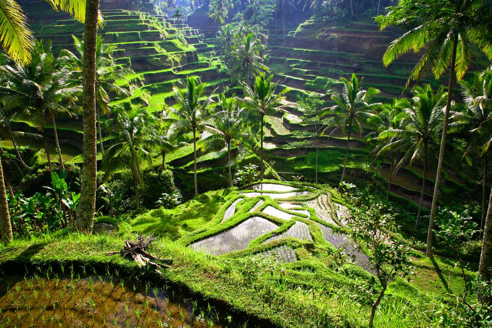 ubud waterfall tour
