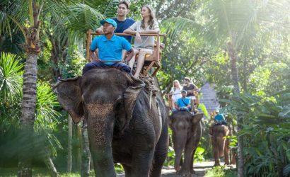 bali zoo elephant ride