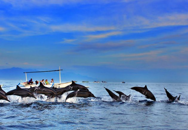 Bali Dolphin Watching Tour