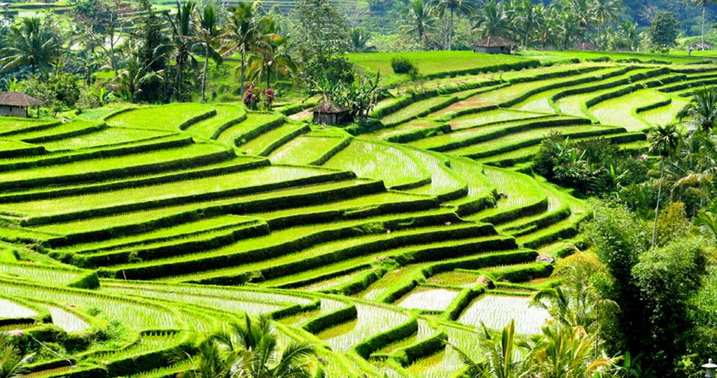 Bali UNESCO World Heritage